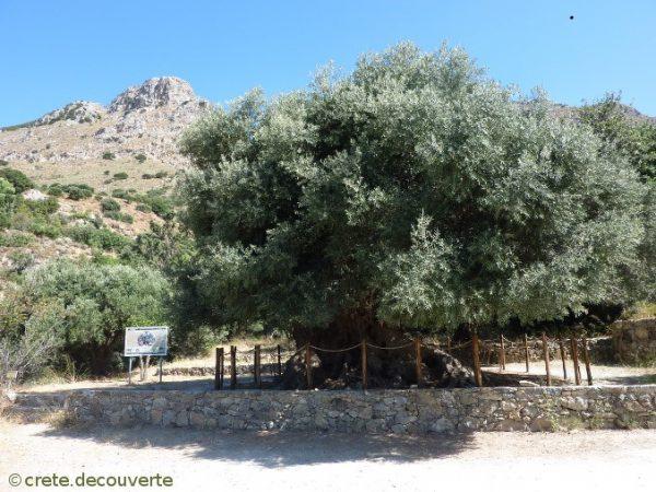 Huiles d'olive ROBERT